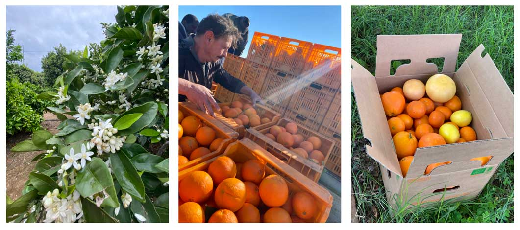 orangen frisch nach hause